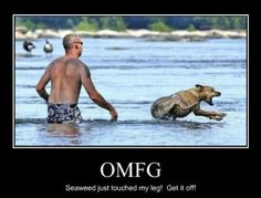 This is me in the ocean... or in a lake... any water that's not a pool, really. LOL SOOO ME!!