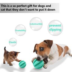 IQ Treat Ball for Dogs and CatsDurable NonToxic Strong Tooth Cleaning Dog Feed Ball for Pet Training/ Chewing/Playing Dog Chew Toys  Size2.8 Blue *** Want additional info? Click on the image. (This is an affiliate link)