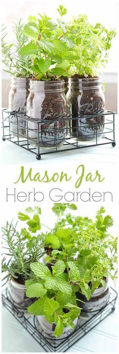 Mason Jar DIY Herb Garden    How To Grow Your Herbs Indoor  - Gardening Tips and Ideas by Pioneer Settler at http://pioneersettler.com/indoor-herb-garden-ideas/