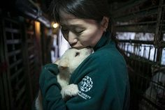 Look of Relief on the Face of a Puppy Rescued From a Meat Farm Will Make Your Day-------- This one image expresses more than a thousand words would. This dog finally found someone who was going to rescue him from his life of cruelty and squalor.