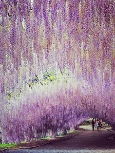 Garden, purple wisteria, purple flowers, mais linda do mundo, beautiful gar Wisteria Garden, Wisteria Tree, Purple Wisteria, Beautiful World, Beautiful Gardens, Beautiful Places, Beautiful Pictures, Best Places To Travel, Places To See