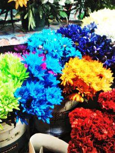 Flores - Linares
