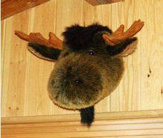 Best stuffed moose ever! heehee