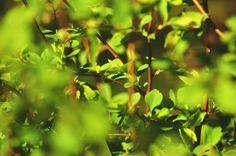 Spring/Green