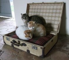 Large vintage Suitcase as a Cat / Dog Bed.