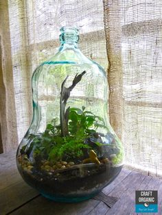 How To Create Your Own Terrarium /  Vivarium