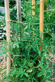 Vegetable Garden Trellis Ideas Inexpensive Vegetable Garden - Vegetable garden trellis ideas