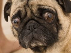 How To Express a Dog's Anal Glands | petMD  -  good instructions and info.   lj