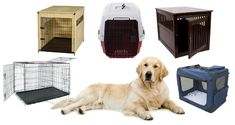 What Size Dog Crate Do You Need? Which Type Is Best?