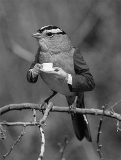 Just Because  Oh My--A White-Crowned Sparrow with a Cup of Tea!