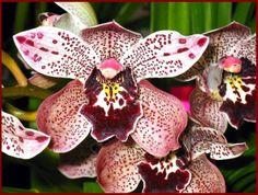 fleur exotique Tree Mushrooms, All About Plants, Cymbidium Orchids, Orchidaceae, Wild Orchid, My Secret Garden, Cut Flowers, Amazing Flowers, Planting Flowers