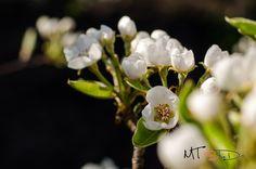 Flori de par by Pricope Marian on 500px
