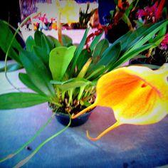 EB Orquídeas Festival Pétala por Pétala - Territórios da Mata