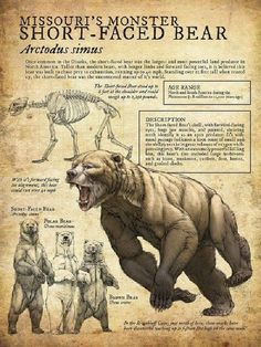 Short-Faced Bear