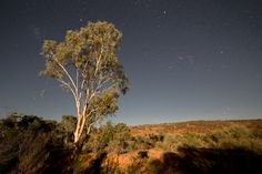 A lone tree is illuminated by the rising moon over the red soil of Mutawintji National Park in Outback Australia. The rugged, mulga-clad Byngnano Range is dissected by colourful gorges, rockpools and creek beds lined with red gums. Mutawintji is an ancient landscape revered by the local Aboriginal people and in 1998, after a long struggle by the traditional owners, management of their land was returned to them. It is now held by the Mutawintji Local Aboriginal Land Council and a Board of…