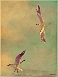seagull lithograph - Google Search