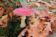 La Cumbrecita, Córdoba, Argentina Pink Mushroom, Mushroom Fungi, Natural Wonders, Slime, Stuffed Mushrooms, Gardens, Graphics, Drawing, Vegetables