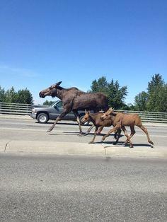 Traffic in Anchorage AK