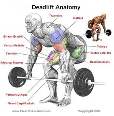 Deadlift Anatomy - this is why I love to deadlift. look at all the muscle involvement. if you want a great butt, hamstrings and back you must deadlift
