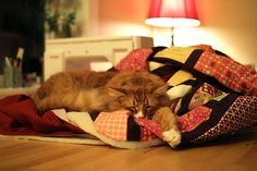 All sizes | Furry Quilting | Flickr - Photo Sharing!