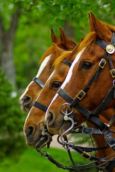 Hunter jumper eventing horse equine grand prix dressage equestrian Rockwell Catering and Events