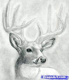 how to draw a deer head, buck, dear head step 9