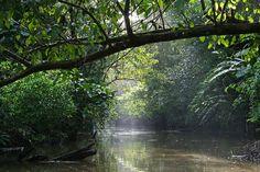 #VivaManatus #EcoTurismo manatuscostarica.com
