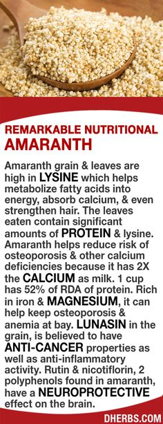 Amaranth grain & leaves contain high amounts of lysine that helps metabolize fatty acids & absorb calcium. Amaranth helps reduce risk of osteoporosis & other calcium deficiencies because it has 2X the calcium as milk. 1 cup has 52% of RDA of protein. Rich in iron & magnesium, it can help keep osteoporosis & anemia at bay. Its Lunasin is believed to have anti-cancer & anti-inflammatory properties. Rutin & nicotiflorin found in amaranth, have a neuroprotective effect on the brain. #dherbs