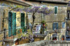 Wisteria Nutt (Glicine), Caprarola, Italy