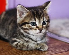 cute tabby cats - Google Search