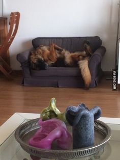 Her own couch.. Lazy to the max