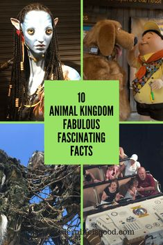 Continuing our series of Walt Disney World Facts here are Ten Fabulous Fascinating Animal Kingdom Facts updated summer How many do you know? Disney World Facts, Walt Disney World Orlando, Disney World Magic Kingdom, Disney Parks, Disney World Resorts, Disney Vacations, Disney Trips, Disney Travel, Disney Vacation Planning