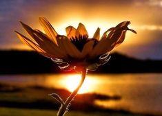 Отношения между двумя людьми похожи на растения: за ними надо ухаживать, поливать любовью, подкармливать заботой, прививать нежностью. Иногда растение болеет, у него осыпаются листья, оно чахнет. И очень важно вовремя принять меры: поговорить по душам, ра