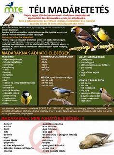 téli madáretetés, madáretetés télen, madáretető madarak etetése, Feeding Birds In Winter, Tree Day, Nature Study, Cute Birds, Earth Day, Succulents Garden, Primary School, Permaculture, Amazing Nature