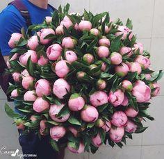 Peonies🌸 via Picture: Kates_flower® Rare Flowers, Cut Flowers, Dried Flowers, Pink Flowers, Beautiful Flowers, Flower Bomb, Flower Art, Beautiful Flower Arrangements, Floral Arrangements