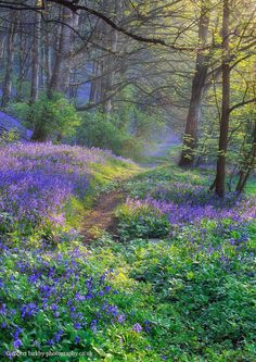 I like the blue and purple among the green in the background.  Gives a fairy-tale-like feel to it.