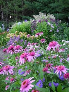 """Royal Candles speedwell (Veronica 'Glory') has a beautiful blue color and grows in a spire shape to 15 inches tall,"""" she says. """"Ask yourself, what goes with that plant? PowWow Wild Berry coneflower (Echinacea 'PAS702917') Gardening"""