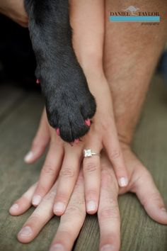 Hands with dog paw save the date
