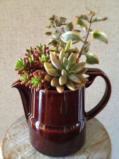 I like the way the Sedum rubrotinctum leaves repeat the red of the pitcher