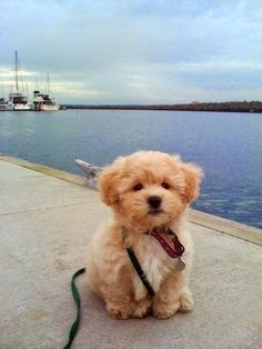 Top 5 Small Breed Dogs More