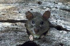 Cómo mantener a las ratas afuera de tu terreno