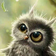 baby owl ... big ol eyes