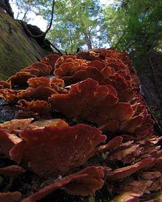 "Sam Calhoun on Instagram: ""Loved these vibrant fungi!  So full of color!  Bankhead National Forest, AL.  #visitnorthal #fungi #explore #getoutstayout  #optoutside…"""