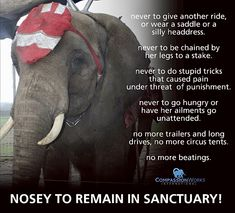 Not My Circus, Elephant Sanctuary, Location History, Tennessee, This Is Us, Freedom, Shit Happens, Twitter, Liberty