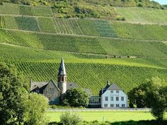 Magnificent Landscape of Vineyard Terraces in Mosel, Germany