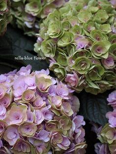 秋色アジサイ・フェアリーキッス☆|静岡市フラワーアレンジメンント教室&ブーケサロン レラブルー rella-blue flower