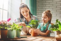 Toxins can be lurking in your favorite couch, mattress and even bookcase. Social Emotional Learning, Plantar, Southern Prep, Prepping, Make It Yourself, Feature Article, Garden Ideas, Appliances, Blog