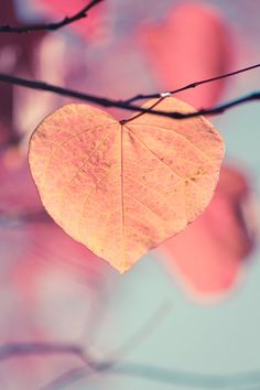 Autumn Photograph, Heart Shaped Leaf, Orange, Gold Leaves on Tree in Fall, Home Decor