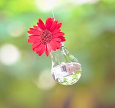 Single Stem Floral Aerial Decor