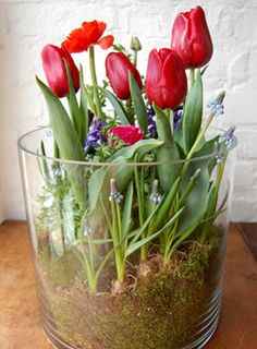 """Love Grows"" Bulb Garden In a clear container, create a lush, mossy garden of spring bulbs in bright jewel tones. Created by: Alethea Harampolis Garden Bulbs, Garden Plants, Indoor Plants, Ikebana, Container Gardening, Gardening Tips, Organic Gardening, Indoor Gardening, Spring Bulbs"